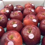 高価な大玉リンゴ「おいらせ」