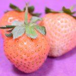 「マツコの知らない世界」や「スッキリ」でも紹介されたイチゴ「桃薫」